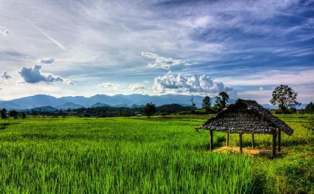 The rice fields were so beautiful!